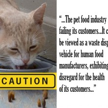 Shocking Report: Pet Food Is Toxic, Full Of GMOs, and Diseased Meat (what you should know)