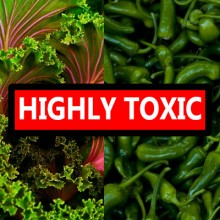"Two Vegetables Reported ""Extraordinarily Toxic"" Yet Not a Part of the New ""Dirty Dozen"""