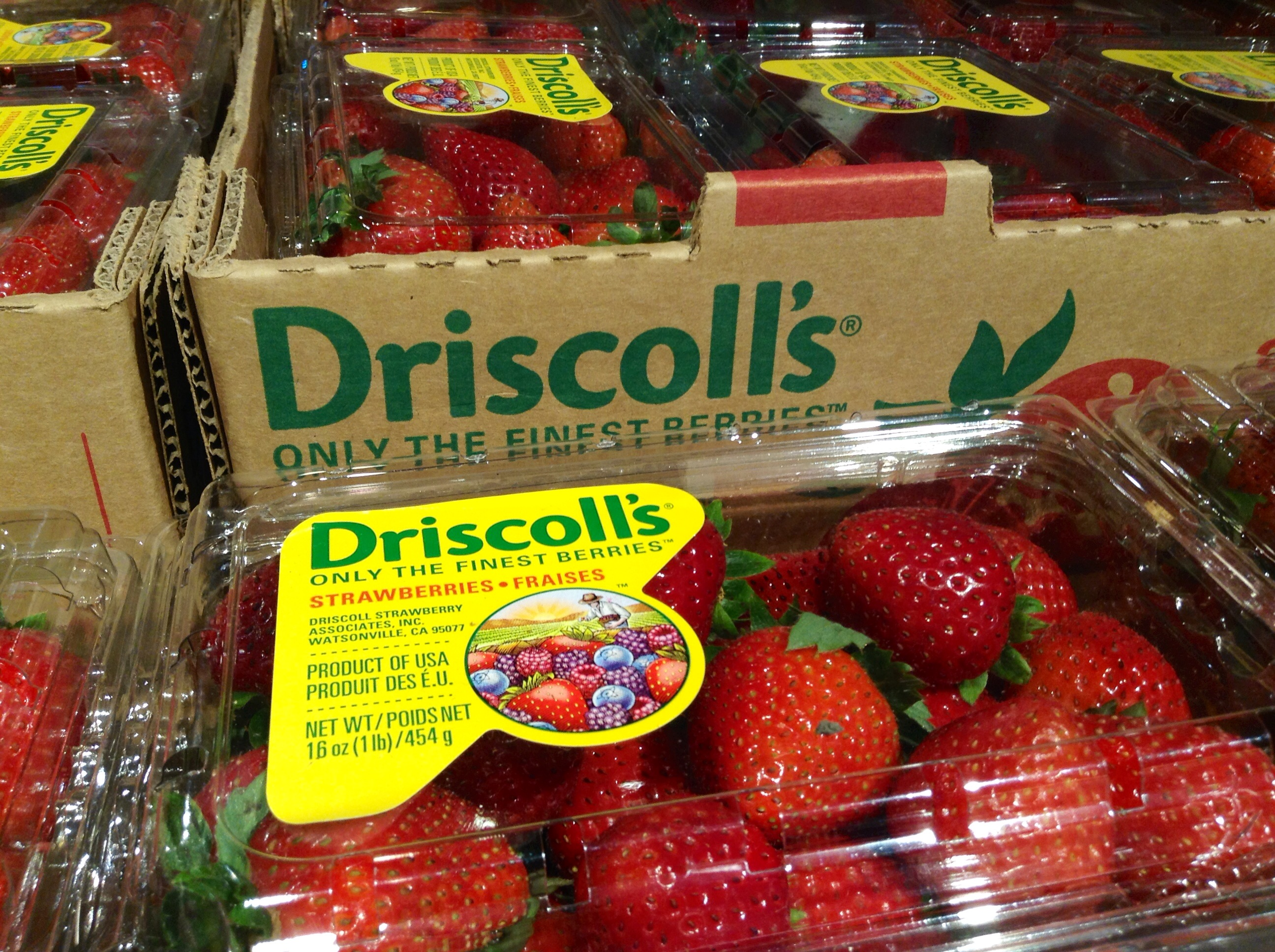 Strawberries are cheap and plentiful in the United States, but at what cost?