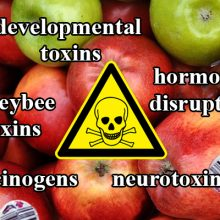 The Reason Apples Earned #1 for Dirtiest Produce: 47 Pesticides & Carcinogens
