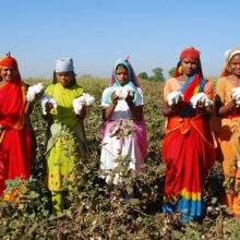 Monsanto Hemorrhaging TENS OF MILLIONS  as Indian Government, Farmers Ditch GMO Crops