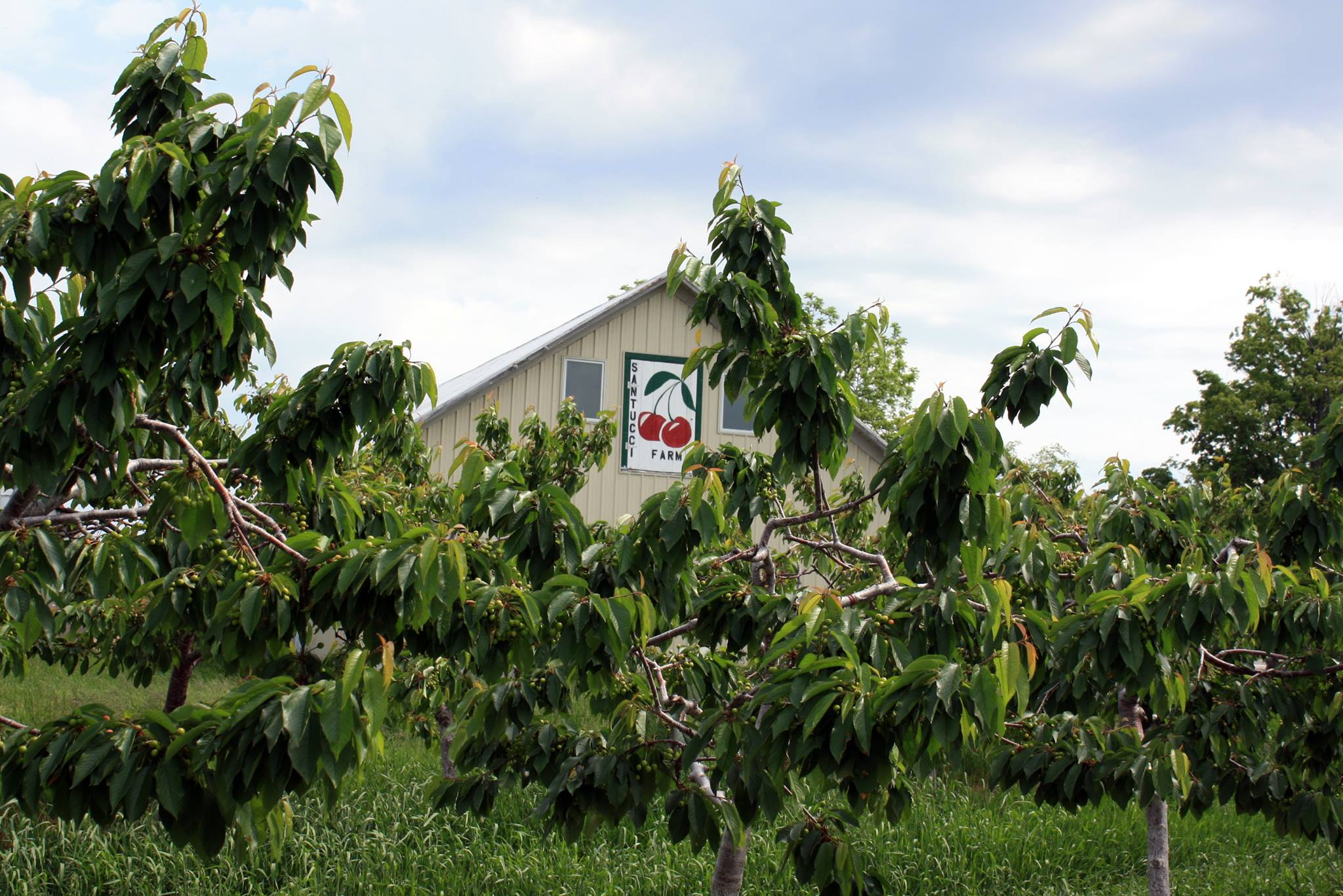 The Santucci Cherry Farm in Traverse City, MI. Photo via their Facebook page.