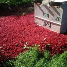 """It Just Doesn't Seem Right:"" Michigan Farmer Forced to Dump 40,000 Pounds of Cherries to Make Way for Import Crops"