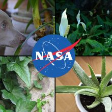 These Are The Best Air Purifying Plants to Buy According to NASA Research (Includes List of Pet Friendly Plants)