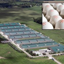 Major Investigation Exposes the Truth About One of America's Largest Organic Egg Brands