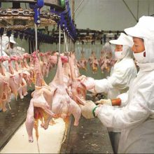 """Public Health is At Risk:"" The Sobering Truth About Imported Chicken From China You're Not Being Told"