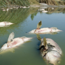 Pesticide Chemical Spill Kills Tens of Thousands of Fish in Virginia