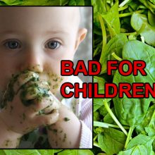USDA Research Shows: Spinach Is Not As Healthy As You Think for ONE Reason (Especially Dangerous for Children)