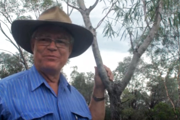 58e2e6492857e Rare Australian Tree Contains Cancer-Killing Properties
