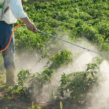 Monsanto Resorts to Paying Farmers Who Use Banned Weedkiller Linked to Widespread Crop Destruction