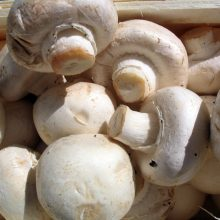 New GMO Mushroom Approved For Human Consumption After Completely Sidestepping USDA Safety Regulations