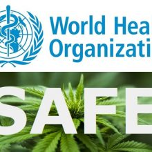 World Health Organization Declares: CBD Oil has ZERO Health Risks or Abuse Potential — Plus Incredible Benefits for Over 15 Serious Diseases