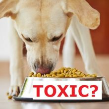 Top 5 Pet Foods That Tested HIGH for Lead, BPA, and Toxic Contaminants (plus top five to use instead)