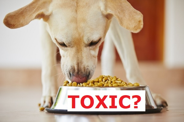 dog eating toxic pet food
