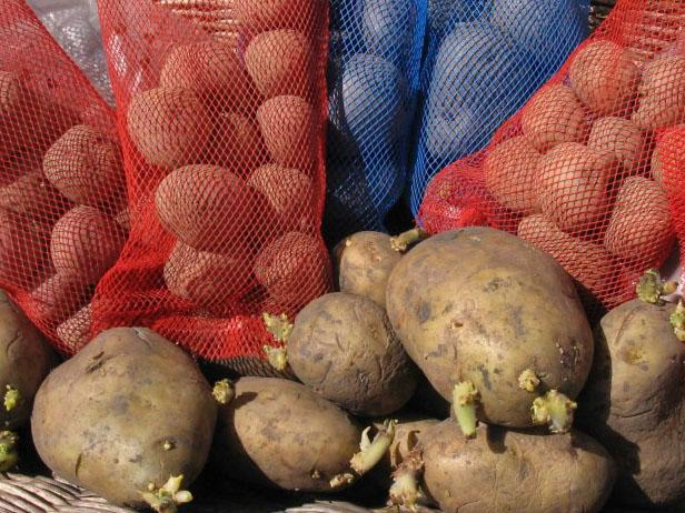 organic ugly sprouted potatoes