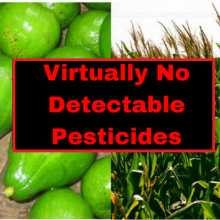 Two Favorite Non Organic Crops Contain Virtually No Detectable Pesticides, Latest Research Shows