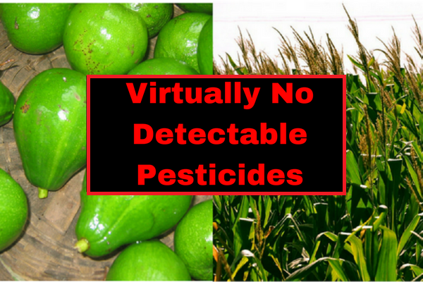 virtually no detecable pesticides