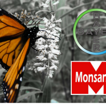 "Monsanto, Bayer Join Forces to Try and ""Save"" the Butterfly Population They Helped Destroy"