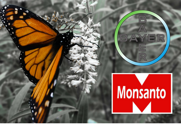 monsanto bayer join forces