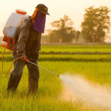 Nine Foods That Are Directly Sprayed with Monsanto's Cancer-Linked Herbicide Before Reaching Your Dinner Plate