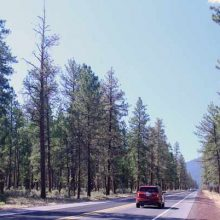 Pesticide Created By Bayer Accidentally Kills Off Twelve-Mile Stretch of Trees in Oregon