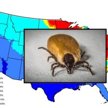 10 U.S. Cities With the Worst Lyme-Carrying Tick Problem And What To Do About It