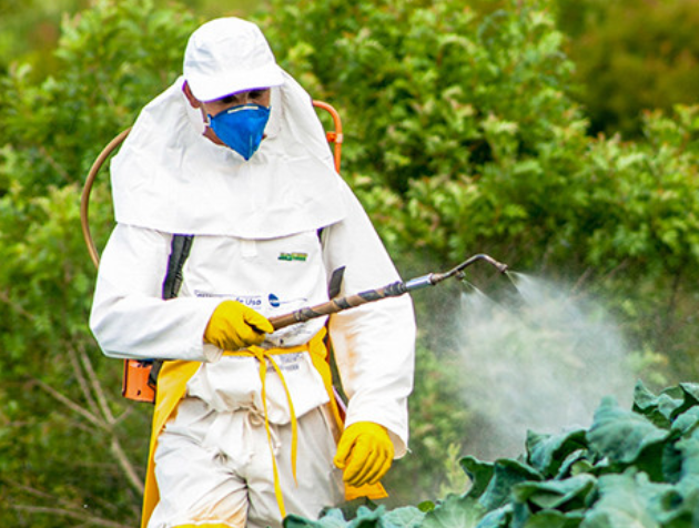 pesticides pregnancy