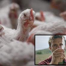 Lab-Grown Chicken Nuggets Made From Feathers Likely to Be Sold Sometime in Near Future