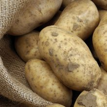 "Potatoes Now Classified as ""High Risk"" For GMO Contamination"