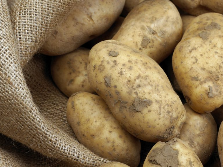 gmo potatoes at risk