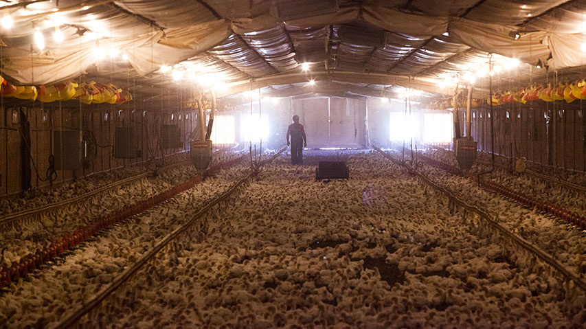 Whistleblower Sues Second Biggest Us Poultry Co Alleges They