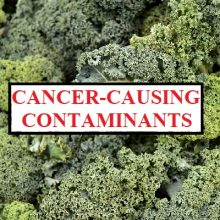 Kale Now One of the Top 3 Vegetables Most Contaminated With Toxic Cancer-Linked Pesticides