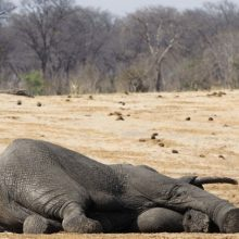 UN Report Warns: One Million Species Face Extinction if Humans Don't Change in These 5 Areas