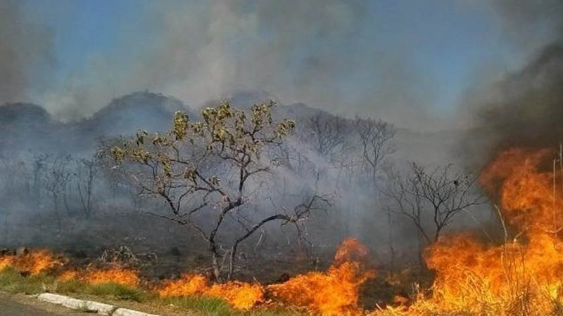 wildfire brazil petition