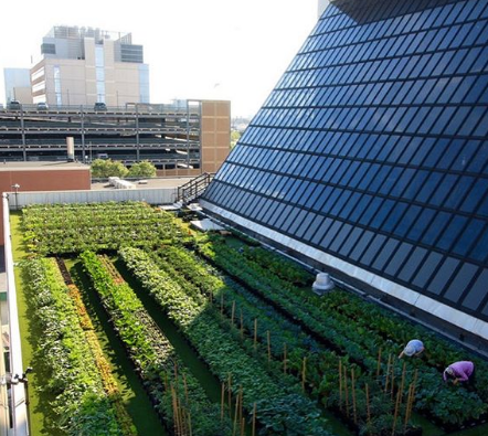 boston solar farm/rooftop