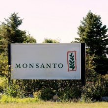 Brazilian Federal Court Rules Against Farmers, in Favor of Monsanto in $7.7 Billion GMO Seed Lawsuit