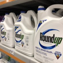 Rite Aid Announces Plan to Phase Out Bee-Killing Pesticides, Including Monsanto's Glyphosate