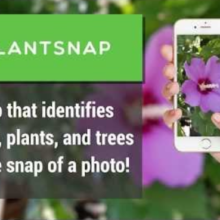 This App Helps You Discover Wild Medicine and Food in the Forest