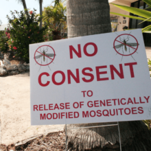 """We Don't Need This Technology:"" Organizers Rally to Stop GMO Mosquito Release in Florida Keys in Memory of Fallen Activist"