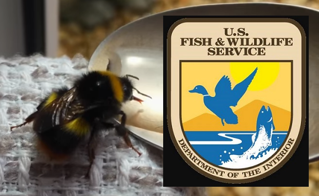 bees us fish and wildlife service