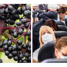 Elderberry Protects People From Viruses and Infection During Air Travel, Research Shows