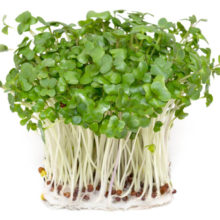 Common Type of Sprouts Dramatically Improves Cancer Patient Survival Rates, Suppressed Research Shows