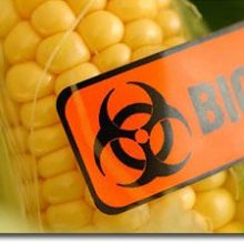 Non-Profit Launches First-of-Its-Kind Database of Studies Documenting Harm from Genetically Modified Foods (GMOs)