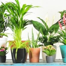 The Best Air Purifying Plants to Buy According to NASA Research (Includes List of Pet Friendly Plants)
