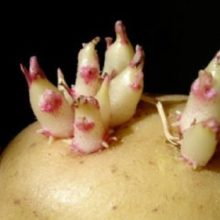 Don't Let Your Potatoes Go Bad! Do These Simple Things to Keep Them From Sprouting.