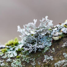 Five Things You Need to Know About Lichen, The World's Most Unknown (and Underestimated) Source of Natural Vitamin D