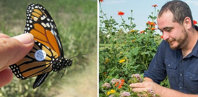 butterflies how to save them