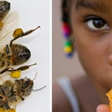 Historic New Bill Would Ban Pesticides Linked to Bee Die-Offs and Brain Damage in Children