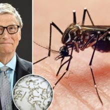 Release of 20 Million GMO Mosquitoes Officially Begins in Florida By Bill Gates-Backed Company
