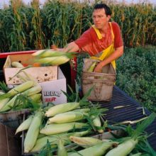 U.S. Farmers Step Up to the Plate, Offer to Supply Mexico with Non-GMO Corn After President's Ban
